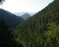 Madal-Tatrad
