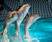 Delfiinide etendus