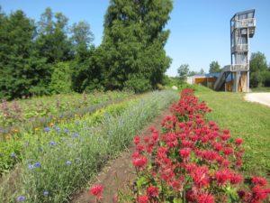 Energia talu ravimtaimepõllud